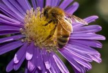 Pollinators and Backyard Wildlife / Nature is all around, learn about the insects, birds and other critters that populate your landscape.