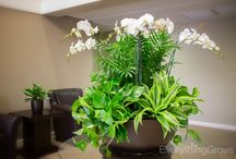 Orchids And Flowering Plants / Indoor coloring plants for commercial spaces