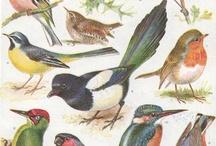 Kuş Baskılar