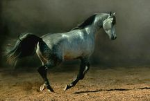 ♫ All the pretty horses... ♪ / by Ursula Duncan Board