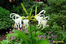 wieloletnie kwiatki - ozdoba ogrodu / kwiaty i ogrod =piękno.