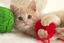 Spelen met huiskat / Het spelen met de kat is belangrijk. Vooral de binnenkat heeft daar behoefte aan om zijn energie kwijt te raken. Een kat die zich veel verveeld kan zelfs agressief gedrag gaan vertonen. Speel iedere dag tenminste 15 minuten met de huiskat. Je bouwt er een sterke band mee op en hij blijft er fit en gezond door. De beste tijd om met de kat te spelen is in de ochtend of avonduren, dan zijn ze het meest actief. Spelen vinden ze leuk, of ze nou jong of oud zijn.
