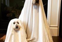 happy Halloween to everybody..