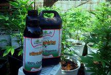 Cultivo Dr. Puntofly con Agrobeta Black Line