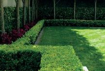 Landscaping ideas for the house