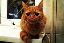 Cat love. / by Jaime McCracken