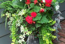 Plantas e flores