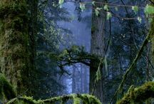 Magical Trees & Wild Forests
