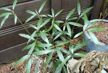Dry shade plants
