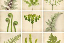 Ferns and Fronds / by Carla Smyrl