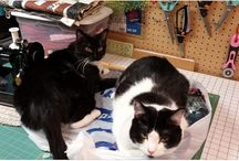 Cats and Dogs and Quilts