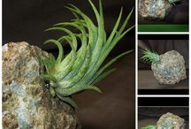 Air Plant Rock Gardens / Beautiful zen-like gardens to go where you go / by Gypsum Moon