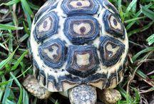 Tortugas   de Tierra / by Pinky Lilly