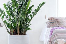 Pflanzen wohnunh