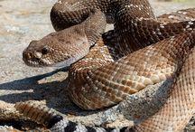 állatok kígyók