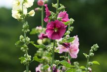 Garden flowers / Wild Flowers