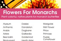 Plants for bees and Monarchs
