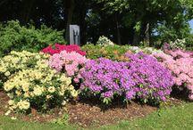 Le Jardin de Daria / Rhododendrons Inkarho, Azalées japonaises et pivoines constituent ce jardin. Le chemin de gravier reliant les parterres est bordé de rangées de lilas doubles blancs.