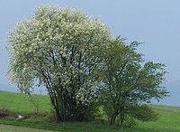 drzewa krzewy