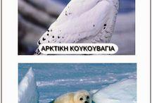 zwierzęta biegunów