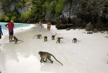 Puket Thailandia