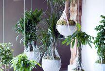 • Plants