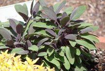 Flavor Enhancing Herbs / Garden herbs to add to recipes.