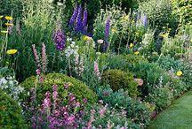 Border/garden ideas