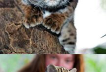 Cute animals / by M. S.