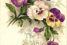 цветы для ХФ