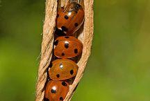 Lovely lady bugs