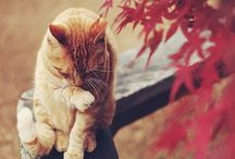 A cat called Bingo / by Susannah Conway | Creativity + Inspiration