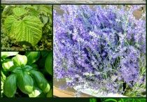 Veg Herb garden
