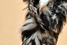 Mooie aparte duifjes