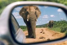 SAFARI  / Tanzania, Kenya, South Africa, Zambia, Botswana, Namibia / by Ash Ka
