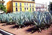 México lindo! / Fotos tomadas en mi viaje por México