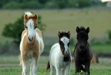 Horses and ponys