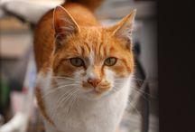猫画像集 / 個人的に撮影した猫写真や気に入ったものなど