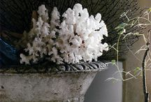feathering the nest. my favorite in homes & decor / by Salina Freeman