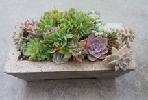 Succulents / Easy to care for plants with endless varieties to choose from.