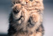 Cute Furry Things