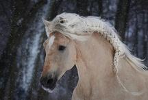 Horses with hair prettier than mine / by Angela Lawson