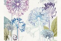 Agapanthus and alliums