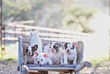 Animals- DOGS / by Becky Merkel