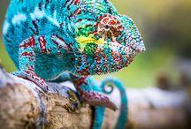 Lagartijas y Reptiles