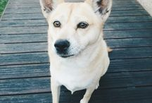 My Dog, Missy / An entire album dedicated to my beautiful seven year old dog, Missy.