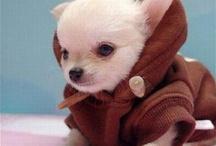 Cutie pie! / by ash torres