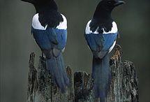 Birds skwark!!!!