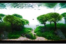 Aquaspace / Awesome Tank