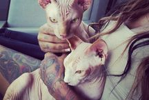 Dare to Dream - Sphynx Cats / by Alexandra Adair